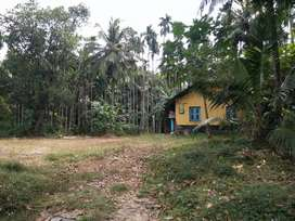65cents arecanut farm with small house and well, 70000 per cent