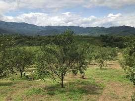 Tanah Kebun Jeruk