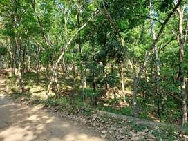 50 meter from the main road to property.full of rubber plantation.
