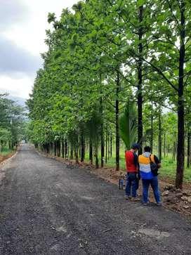 Tanah kavling pinggir jalan provinsi
