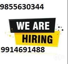 fresher experienced staff need in Ludhiana