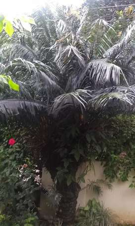 Household Plants Rs.250 to Rs.5000