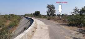 Road Touch Kesar Mango Farm Agriculture Land Vadodara Savli