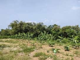 Survey lokasi kavling kebun vanili cavendish 52 Juta SHM
