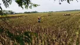 Tanah produktif Karawang