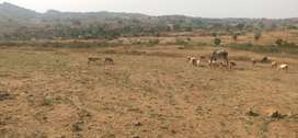 33 ACRES AGRICULTURAL LAND PROJECT NEAR DENKANIKOTTAI