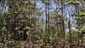 Tanah, Rumah Jawa & Pohon Jati