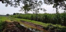 Jual Tanah Sawah Produktif 3500 m2 SHM