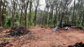 10 Cent House plot for sale ( Urgent sale) Velamanoor- kalluvathukal