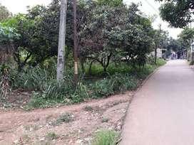 Dijual Tanah Kebun 600M2 Citeureup, Kab. Bogor
