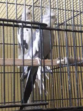 Cocktiel Pair