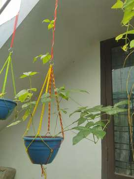 Hanging pots rope