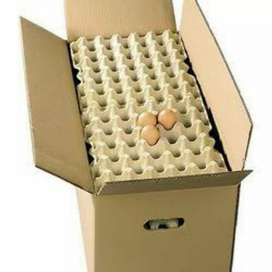 Egg box new
