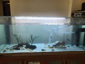 5 feet 1year old aquarium for sale with all accessories a d fishes n