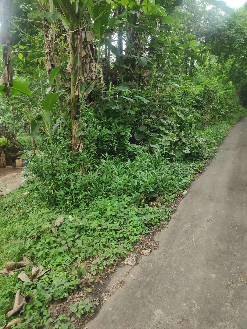 Tanah murah pinggir jalan aspal lokasi Sepang Ciracas serang