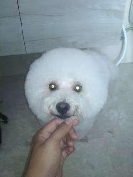 Salon Hewan anjing kucing ke rumah jasa grooming panggilan cukur mandi
