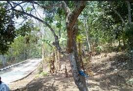 Tanah lokasi bagus untuk tempat wisata, pesantren, perkebunan dll