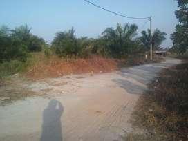 kebun sawit di jual luas 3 H,umur 4 th buah pasir ( bisa perhektar )