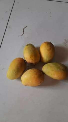 Nuzveedu mangos