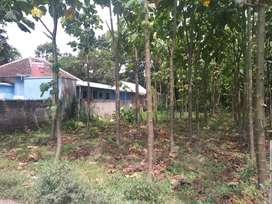 Tanah pinggir Jalan Desa dekat Bandara Jember