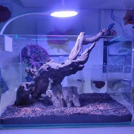Aquarium Driftwood and moss for planted tank