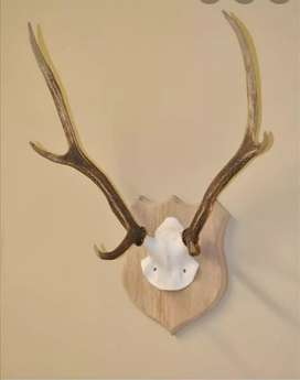 Horn wall hanging