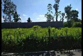Tanah di jual luas 60ru di Tanjungsari Blitar