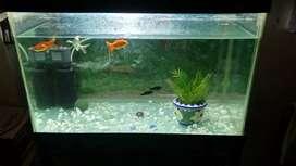 Fish aquarium    + stand + filter + sand + stone