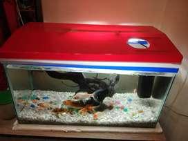 Aquarium (medium size)