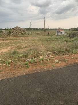 Coconut farm/agriculture land/farm land/agricultural land/farm house