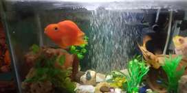 Fish aquarium wid fishes and accessories