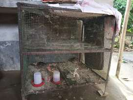 Iron Cage with net