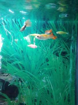 Aqurium with 5 different fishes pairs with ligting and air pump complt
