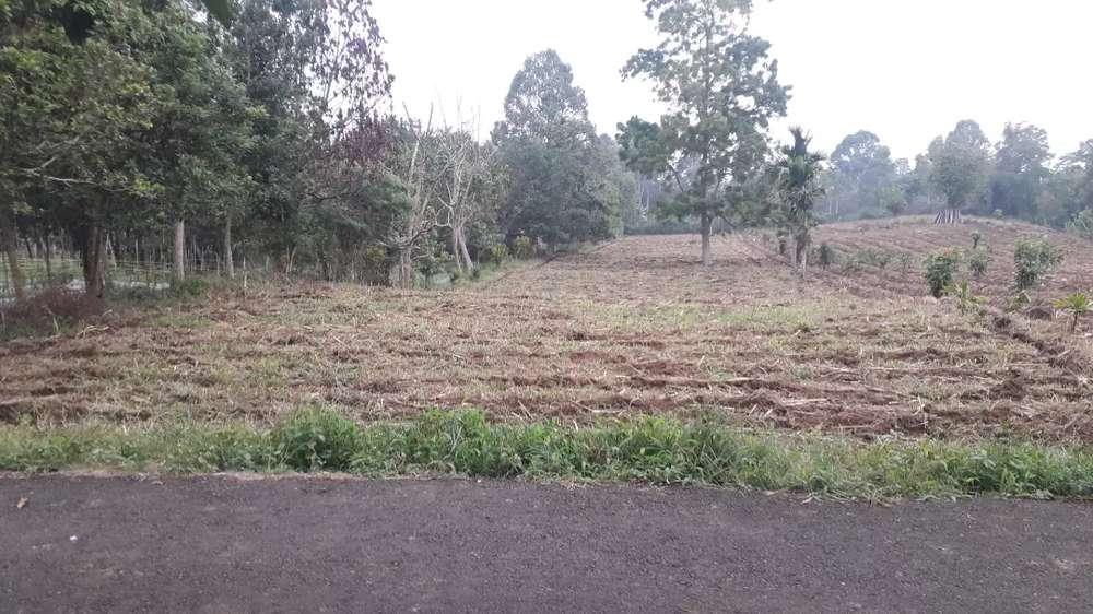 di jual nego lahan pertanian bisa juga untuk buat komp. perumahan