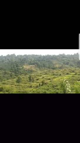Tanah kebun bisa kerjasama pertanian atau peternakan