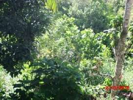 (ISW) Tanah Desa Nupabomba Donggala - Sulawesi
