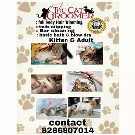 cat grooming available in thane mumbra