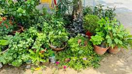 Variety of Plants for Home Garden