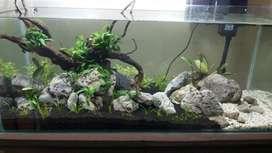Nature Aquarium setups