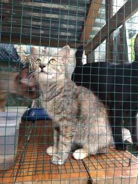 oper adopsi kitten KHUSUS PALEMBANG