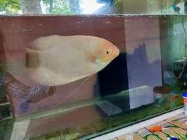 It is a big fish