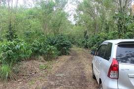 Kebun kopi 1 hektar tebat karai