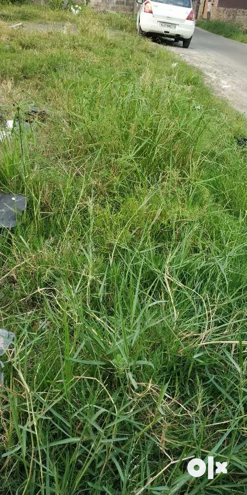 8.5cents residential cum commercial land near edappally toll