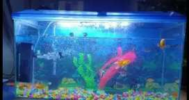 Ready  fish tank set up for sale 5000 rs
