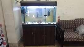 imporant Aquarium