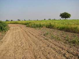 Agricultural Land For Sale In Main Channu