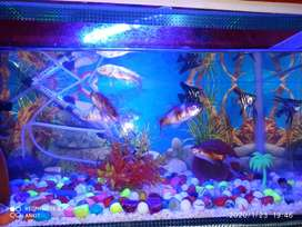 Beautiful aquarium price can be reduced