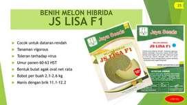BENIH MELON HIBRIDA Varietas JS LISA F1