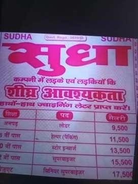 Sudha dairy milk jobs