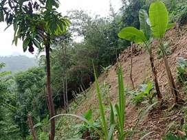 Jual Tanah Daerah Puncak Sempur Loji Karawang 80.000/meter